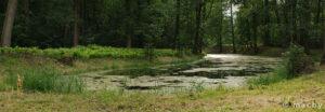 Vlašimský park - slepé rameno Blanice