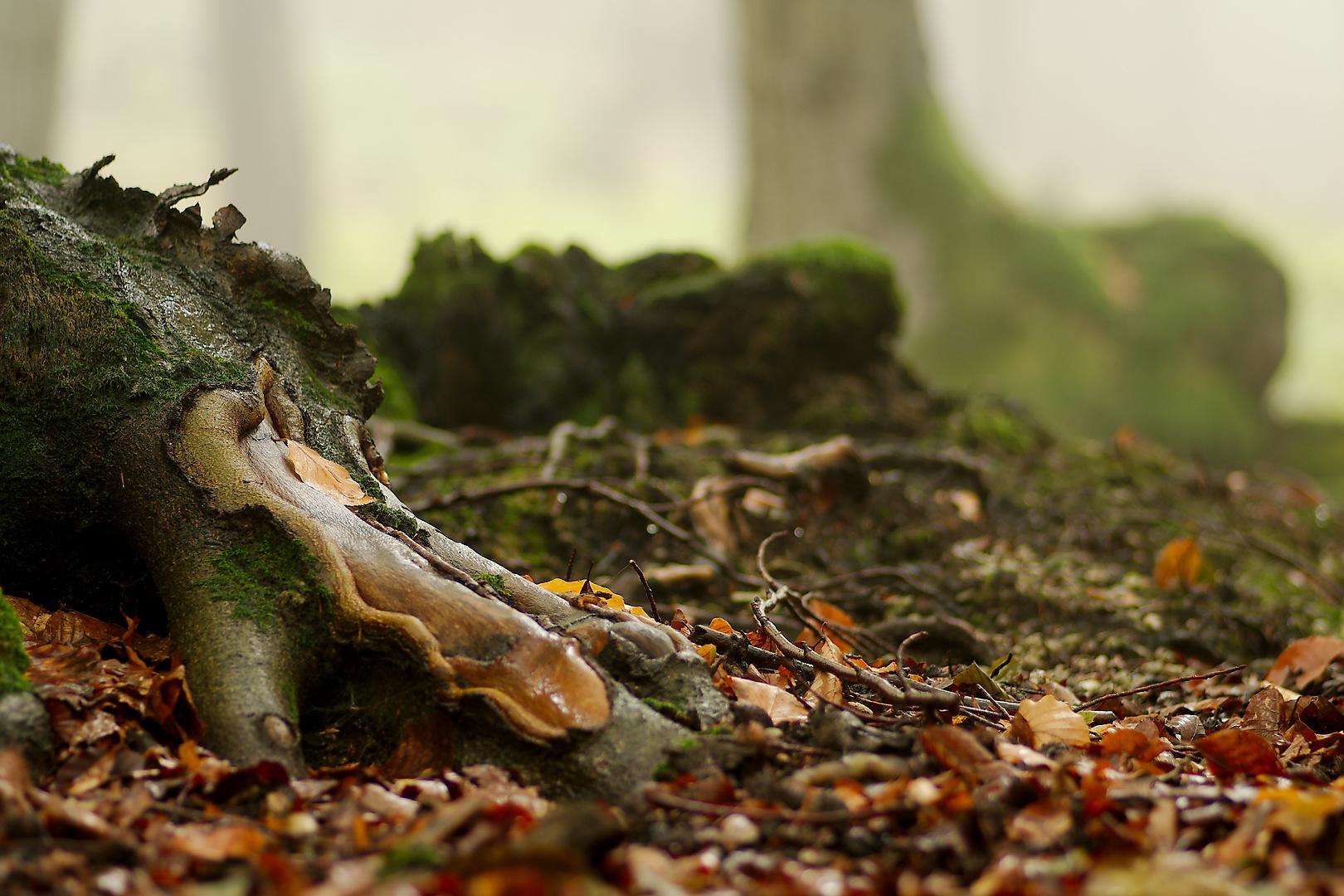 Kořen - Suľov na Slovensku
