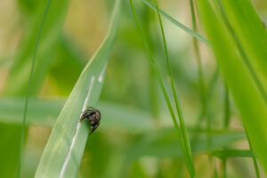 Skákavka (Salticidae)